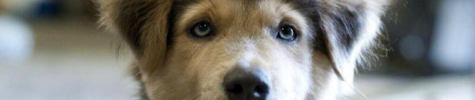cropped-Husky-Earth-Pics.jpg
